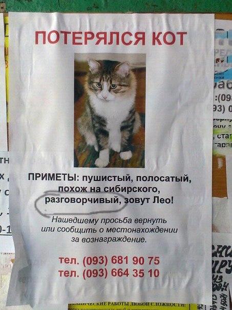 """У Черкасах розшукують """"балакучого"""" кота"""