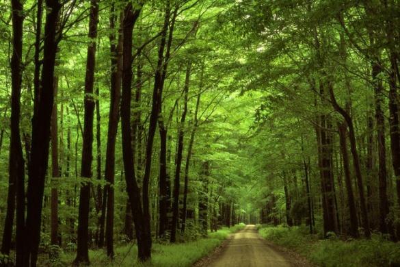 Черкащан закликають поки що утриматися від відпочинку в лісі