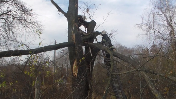 На Черкащині чоловік загинув, зрізуючи гілля на дереві