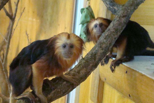 У черкаському зоопарку з`явилися рідкісні мешканці (ФОТО)