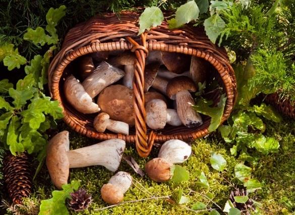 Ліси на Уманщині потрапили до переліку найкращих місць України для грибників
