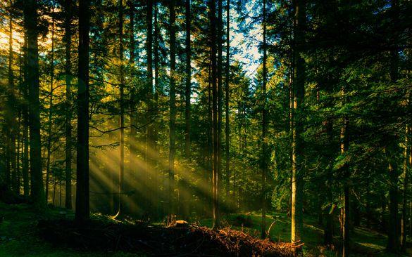 На Черкащині державі повернули ліс вартістю понад 10 мільйонів гривень