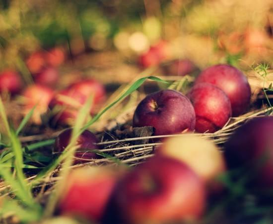 На Черкащині яблука будуть дорогими аж до квітня