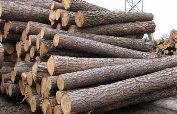 На Черкащині засудили директора лісового підприємства