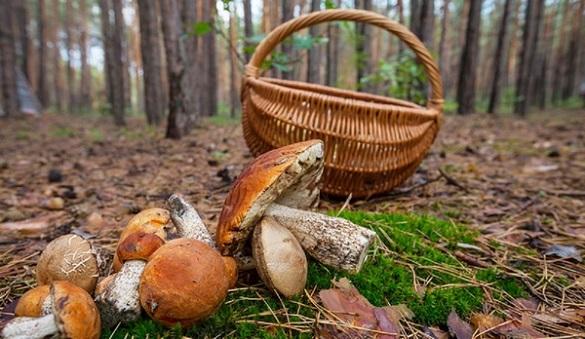 Чоловік на Черкащині отруївся грибами