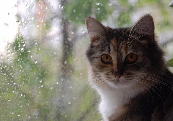 Черкаські синоптики розповіли, якою буде погода на цьому тижні