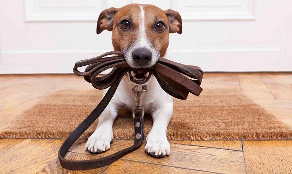 Відтепер за вигул неналежним чином собак черкасців притягатимуть до відповідальності