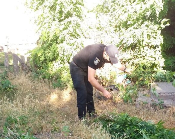 Черкащанин вирощував у власному дворі коноплю (ФОТО)