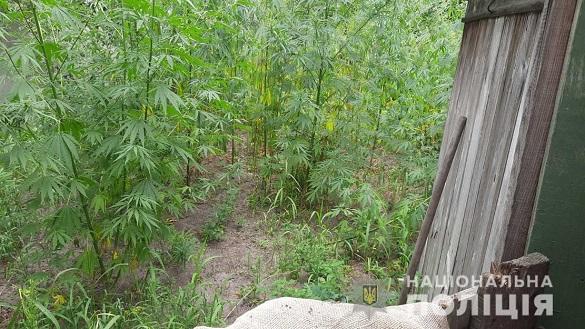 Черкащанка вдома вирощувала майже 100 кущів коноплі