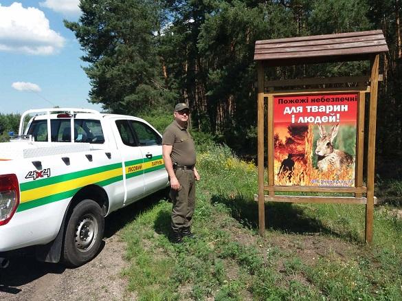 П'ятнадцять незаконних рубок лісу було виявлено на Черкащині