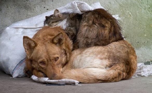Черкаські програмісти створили додаток для допомоги безпритульним тваринам