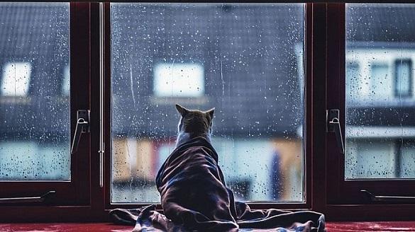 Черкаські синоптики прогнозують дощі на завтра