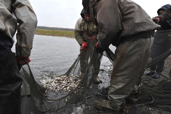 В річку Дніпро у Черкасах випустять понад 30 тисяч товстолобів