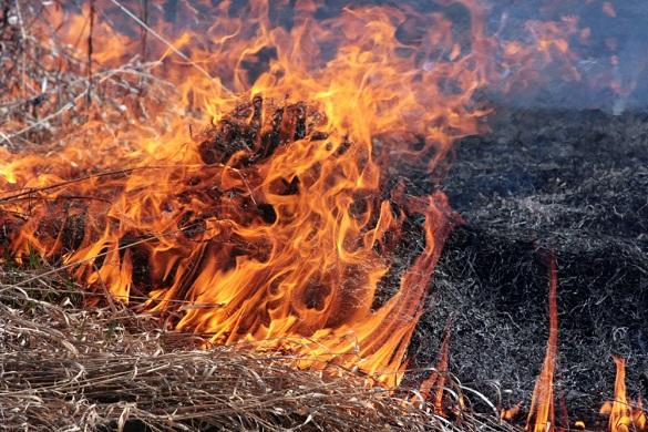 На Золотоніщині через спалювання кукурудзиння загинула пенсіонерка
