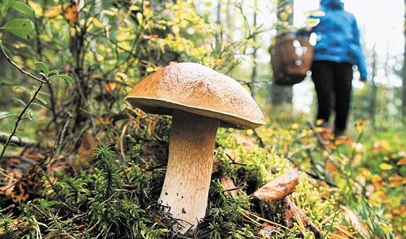 На Черкащині жінка отруїлася грибами