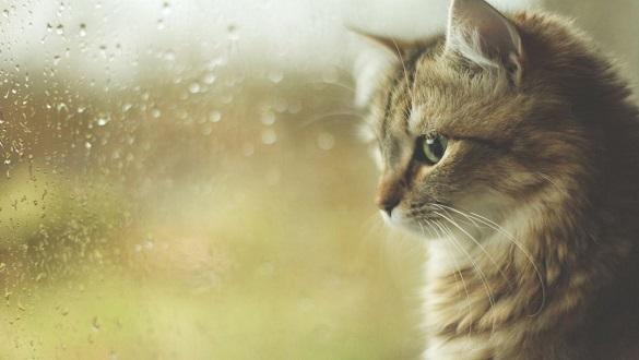 Завтра в Черкаській області буде хмарна та дощова погода