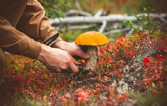 На Черкащині чоловік отруївся грибами: його стан наближений до тяжкого
