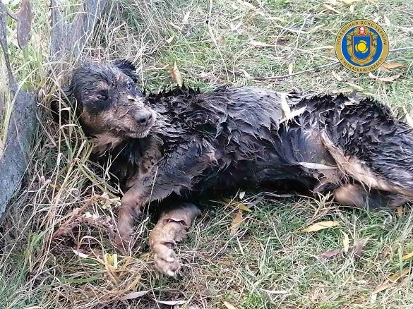 На Черкащині рятувальники дістали чотирилапогоіз водойми (ФОТО)