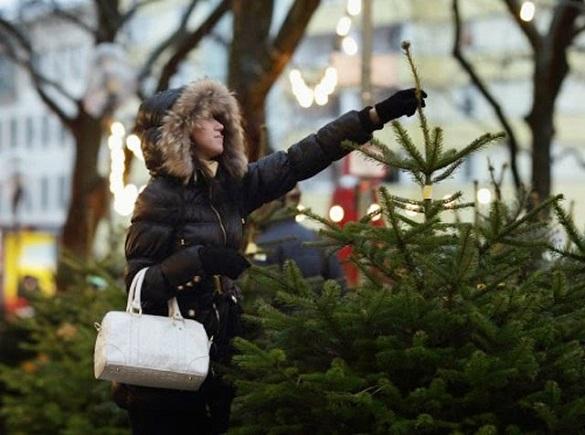 Коли у Черкасах розпочнеться торгівля новорічними ялинками