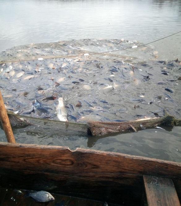 У Черкаській області спіймали браконьєрів, які наловили риби на майже пів мільйона гривень