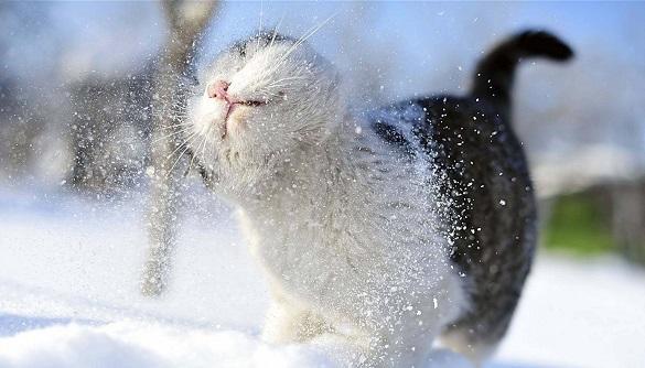 У Черкаській області скоро потеплішає