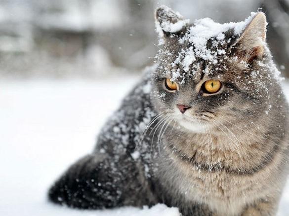 У Черкаській області до кінця тижня знову засніжить: прогнозують до 20 см снігового покриву