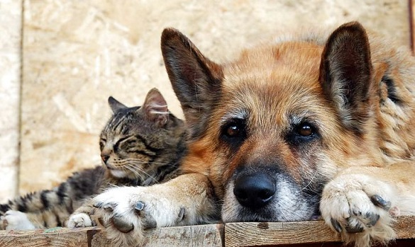 На Черкащині хочуть створити притулок для перетримки тварин
