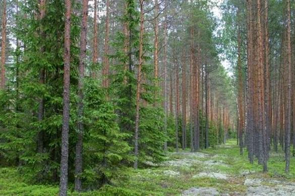 Вартість три мільйони: Черкащині повернуть у власність земельну ділянку