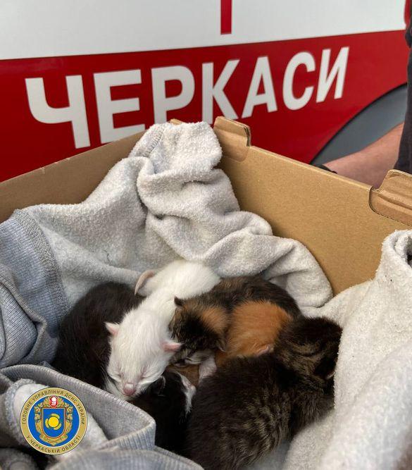 На Черкащині врятували п'ять новонароджених кошенят під час пожежі: їм шукають дім (ФОТО)
