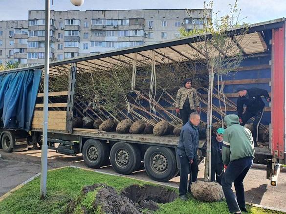 У одному з мікрорайонів Черкас висадили понад 30 сакур (ФОТО)