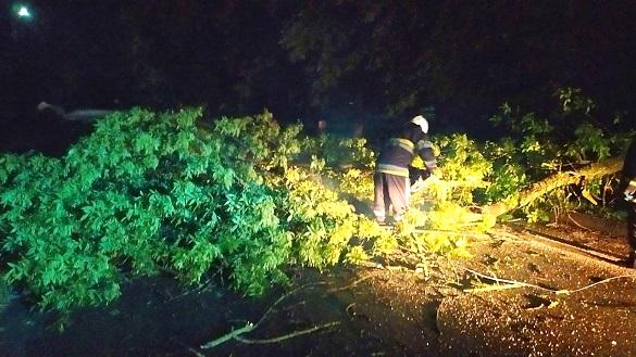 На Черкащині повалені вітром дерева блокували проїзд автомобілів