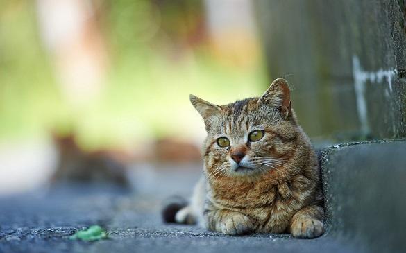 У Черкасах мітингують зоозахисники, щоб міська рада виділила гроші на стерилізацію котів