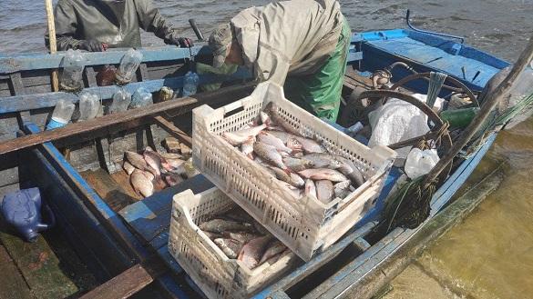 Збитки понад 300 тисяч: на Черкащині рибалка наловив 40 кілограмів судака (ФОТО)