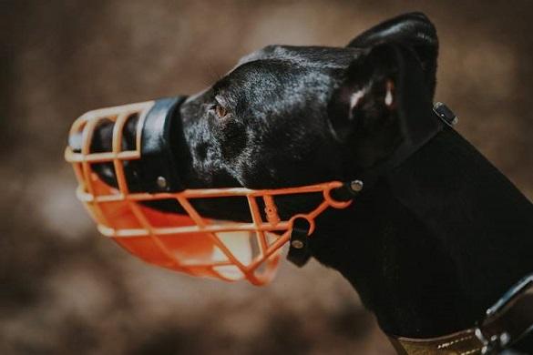 Черкащани підтримали петицію про заборону вигулу собак без намордників