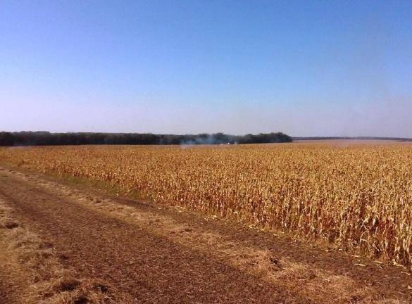 На Черкащині через необережність горіло кукурудзяне поле