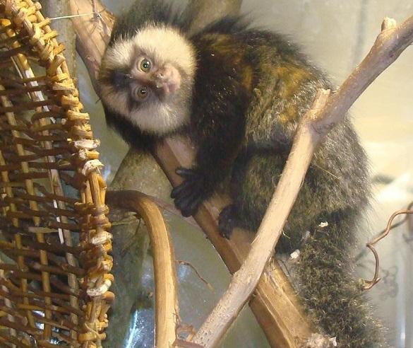 У черкаському зоопарку поселилися нові мешканці (ФОТО)