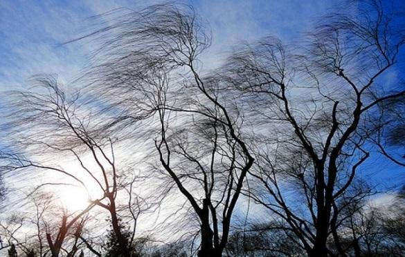Штормове попередження: у Черкасах та області очікується посилення вітру