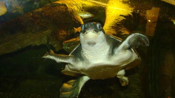 У черкаському зоопарку живуть черепахи дев'яти видів (ФОТО)