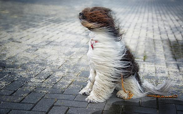Сьогодні в Черкасах та області - сильні пориви вітру