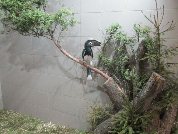 У черкаському зоопарку показали, як використовують новорічні ялинки, які передали містяни (ФОТО)