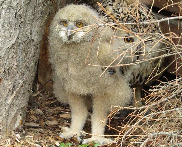 У Черкаському зоопарку з'явився новий мешканець (ФОТО)