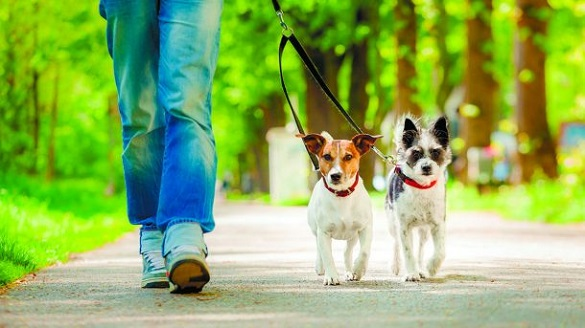 Черкасці просять посилити відповідальність власників собак за вигул неналежним чином
