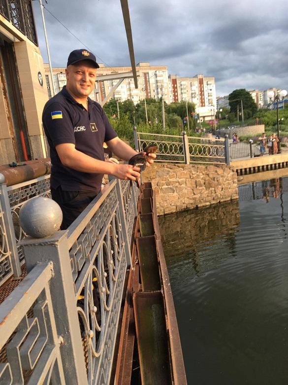 На Черкащині рятувальники витягли з пастки диких каченят (ФОТО)