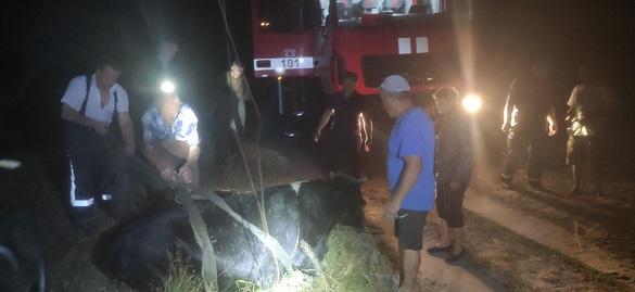 Із полону багнюки на Черкащині рятували корову (ФОТО)