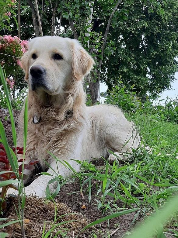 За собаку, який зник, на Черкащині пропонують 8 тисяч гривень (ФОТО)