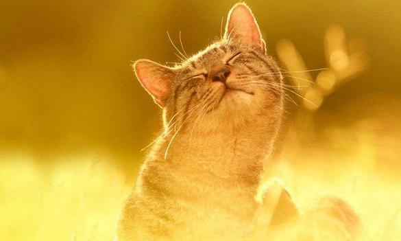 Черкащан завтра чекає сонячна та маловітряна погода