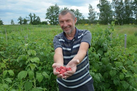 Переселенець з Донецька на Черкащині вирощує малину (ФОТО)