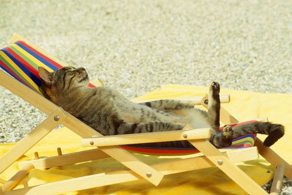 Сухо та спекотно: яка погода на Черкащині буде цього тижня?