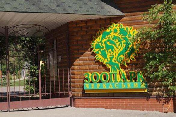 Чим годують мешканців черкаського зоопарку влітку (ВІДЕО)